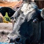 El Sistema Lechero Neozelandés atrae a Ganaderos Brasileros