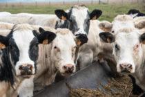 """España Reporta Segundo Caso Atípico del Año del """"Mal de las Vacas Locas"""""""