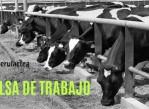 Trabajo_Veterinario_Establo_Arequipa