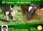 como_hacer_dietas_para_vacas_lecheras