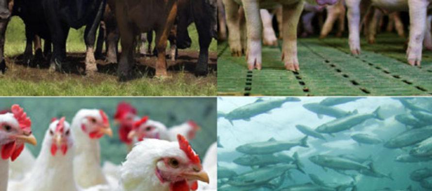 La Proteína Animal Tendrá un Alto Crecimiento en el Mercado Mundial 2018