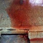 Un Nuevo Proceso para Mejorar el Tratamiento de Aguas en los Mataderos