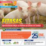 EN VIVO: FITASAS, Aprovechando Mejor el Fósforo en Dietas de Cerdos