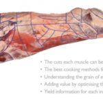 Importancia del Músculo para Lograr el Máximo Valor de la Canal de Carne de Vacuno