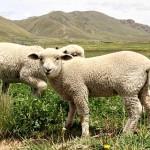 Sector Agropecuario se Consolidó en el Segundo Escalafón de la Economía Peruana en el 2017