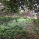 Colombia Implementará Sistemas Silvopastoriles para Potenciar la Ganadería