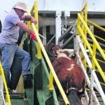 Uruguay se Consolida como Exportador de Ganado en Pie a Diversos Países
