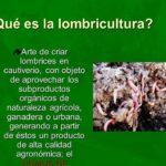 La Lombricultura: La Ganadería de Lombrices