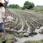 Agricultura y Ganadería Crecieron 11.5%