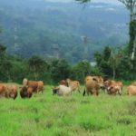 Los Árboles  Mejoran los Ingresos Económicos de las Fincas Ganaderas