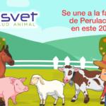 ¡Damos la Bienvenida a la Empresa Asvet en este 2018!