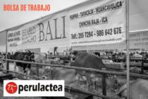 Establo Lechero Busca Contratar un Inseminador – Sanitario