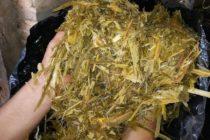 Programa Ganadero Promueve el Uso de Ensilado de Pasto Camerún en Paraguay