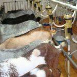 Nuevos Productos Derivados de la Leche de Cabra de Gran Valor Añadido para la Alimentación