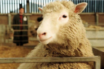 Los Animales que la Ciencia Logró Clonar