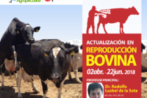 Curso On Line Multidocente: Actualización en Reproducción Bovina