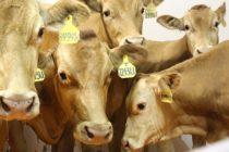 Crean Virus para Sanar las Vacas