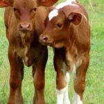 Agricultura Informa de Primeros Nacimientos por Fertilización In Vitro en RD