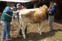 Senasa: Colectará dos mil Muestras para Descartar Brucelosis en Establos Lecheros de Cuzco