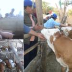 Lambayeque: Ganaderos Chotanos Comparten Experiencias con Agricultores de Diferentes Comunidades