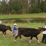 Piura: Senasa Programa Acciones Zoosanitarias Preventivas en Localidad de Los Ranchos