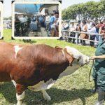 Ganadería Peruana se Beneficiará con Proyecto del Minagri