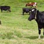 Ministerio de Agricultura y Desarrollo Rural Impulsa la Venta de Leche en Polvo Colombiana