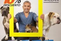 """Alimento Súper Premiun, Libre de Gluten con Antioxidantes Naturales """"Cesar Millan"""""""