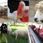 Sector Agropecuario Repunta en 3.9% en enero por la Producción Agrícola y de Animales Vivos