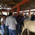 Perú: MINAGRI Capacitó a Equipo Técnico para Control de Brucelosis y Tuberculosis Bovina