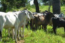 La Organización Mundial de Sanidad Animal le Sigue Preocupando la Fiebre Aftosa