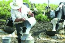 Pequeños Ganaderos del Perú Han Visto Cómo los Precios por su Leche Fresca no han Aumentado Desde el 2001