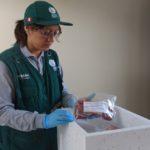 Perú: Se Realiza Plan Nacional de Monitoreo por Residuos Químicos en Carnes de Bovino
