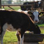 Argentina: Presenta la Primera y Única Vacuna Contra la Diarrea Viral Bovina