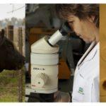 Brasil va a Exportar Embriones Bovinos in Vitro para Ecuador