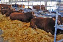 MINAGRI Garantiza Estatus Sanitario en la Feria Nacional Ganadera del Sur del Perú – Fegasur 2018