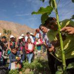 Región Lima: Productoras y Productores se Capacitan en los Procesos de Control Interno Para la Producción Agroecológica