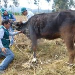 MINAGRI en Piura: Campaña Zoosanitaria Gratuita en Provincia de Sechura