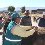 MINAGRI: Dosificación Masiva de Ganado para Salvaguardar Sanidad Pecuaria en Zona en Emergencia