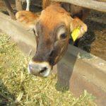 Senasa: La Alimentación es Fundamental para Proteger la Sanidad Pecuaria ante las Heladas