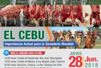 EN VIVO: El Cebú – Importancia Actual para la Ganadería Mundial