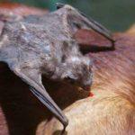 Argentina: Sigue la Alerta por Brotes de Rabia por Murciélagos