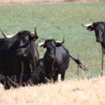 Factores Culturales y Ambientales Condicionan la Distribución de las Razas Ganaderas Autóctonas en España