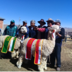 SPAR-Macusani Organizo la Tercera Expo Alpaca – Llama Munaypaqocha 2018