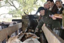 Paraguay: Lanzamiento del Tercer Periodo de Vacunación Contra la Fiebre Aftosa y Segundo Periodo de Brucelosis Bovina 2018