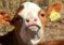 Chile Prioriza la Trazabilidad Animal Mediante Nueva Iniciativa