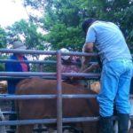 Panama: MIDA Sigue al Cuidado del Cordón Fronterizo