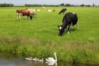 Recomendaciones para la Planificación y Control del Pastoreo Durante el Otoño e Invierno