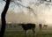 Senasa Ejecuta Acción Cívica en Otuzco por Altas Temperaturas para Proteger Producción Pecuaria