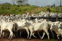 Paraguay: SENACSA Establece el Segundo Periodo de Vacunación Contra la Brucelosis Bovina en todo el Territorio Nacional